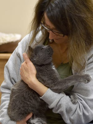 Most of the rescued cats from Washington Island showed some degree of socialization including Jackson, who snuggles with Door County Executive Director Carol Boudreau on Tuesday, Sept. 19, 2017.