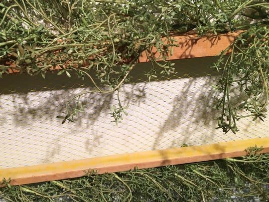 """Jennifer Pepper, """"Wild Empties,"""" 2017, wood hive frames, beeswax, plastic, pigment, 81x29x6""""."""