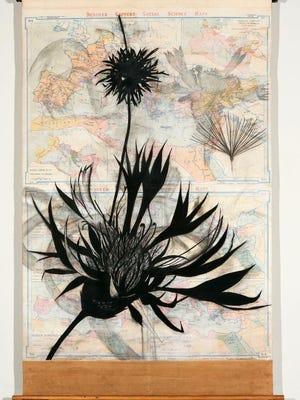 Suzi Davidoff, Roman Empire/Ara Pacis and Centaurea, 2017, charcoal, gesso, map