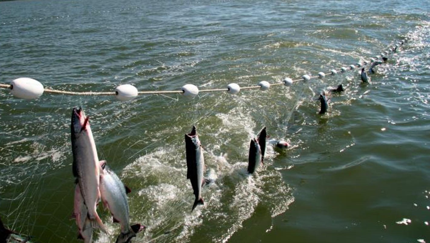 Gill net study proposed on lake michigan for Gill net fishing