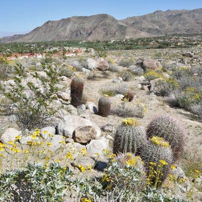 Jay Calderon/The Desert Sun A large scenic area near