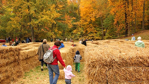 Bernheim Forrest's ColorFest includes a hay maze and more family fun Saturday.