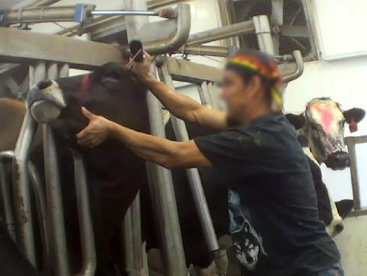 APCBrd-03-16-2015-Crescent-1-A007-2015-03-15-IMG-APC-Cow-abuse.jpg-1-1-64A6VST3-L578613066-IMG-APC-Cow-abuse.jpg-1-1-64A6VST3.jpg