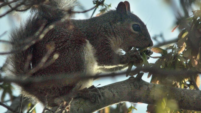 Officials think a squirrel may have caused a power outage along Atlanta Highway on Monday.