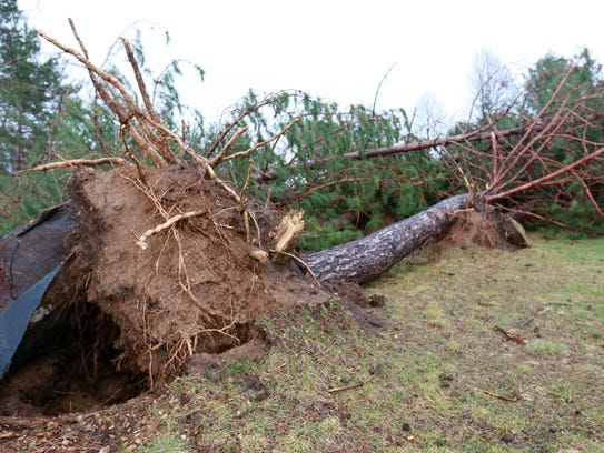 A row of trees down by the storm Monday morning alongide