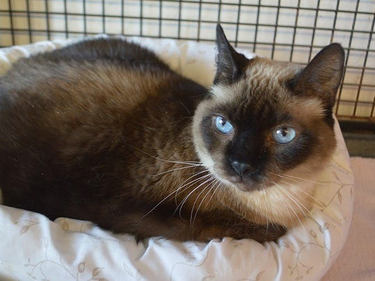 Maya is available for adoptionat Sun Cities 4 Paws Rescue, 11129 Michigan Avenue, Youngtown. For more information, call 623-876-8778 after 10 a.m.