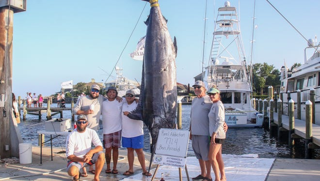 Ben Arnold of Reel Addiction, blue shorts, brought in a 125-inch long, 771.4 pound blue marlin during the 46th annual Pensacola International Billfish Tournament on Saturday, July 1, 2017.
