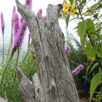 Mariners Trail Gardens, along the Lake Michigan shoreline between Manitowoc and Two Rivers, is a celebration of colors and textures during autumn.