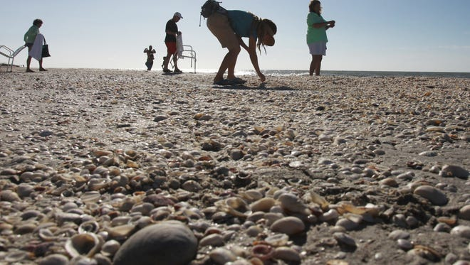 Bailey-Matthews National Shell Museum marine biologist Becca Mensch performs the Sanibel stoop while looking for shells during a shell walk on the beach near the Island Inn on Sanibel on Thursday.