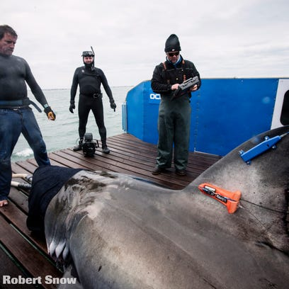 Lydia, weighing in at around 2,000 pounds and measuring