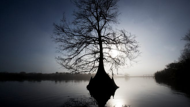 A cypress tree is silouhetted on the Kissimmee River just after the restored area.