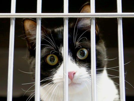 4 Hi Tor Animal Care Center