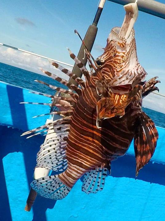 636457519941336864-lionfish-safari.jpg