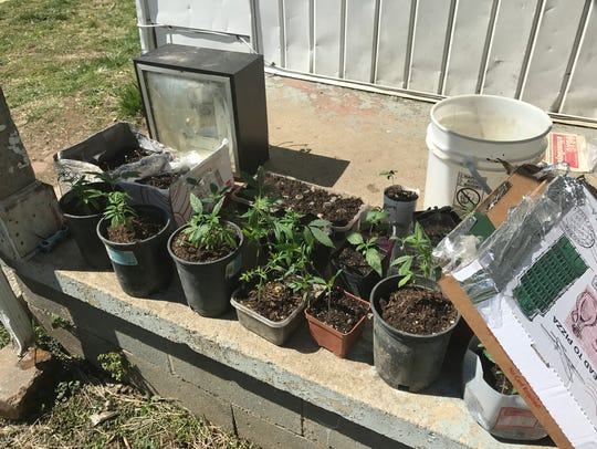 About 20 marijuana plants were found growing in a home