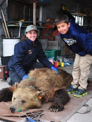 Kimberly Shields, a Montana Fish, Wildlife and Parks bear management technician, and her son, Aden Harding of Choteau, pose with a grizzly bear that was captured north of Choteau after it killed chickens and a turkey at a ranch. The grizzly was relocated Monday to the Flathead National Forest.