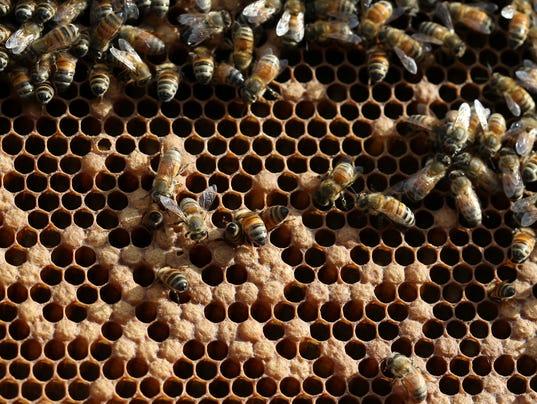636591219911130424-Bees-2.jpg