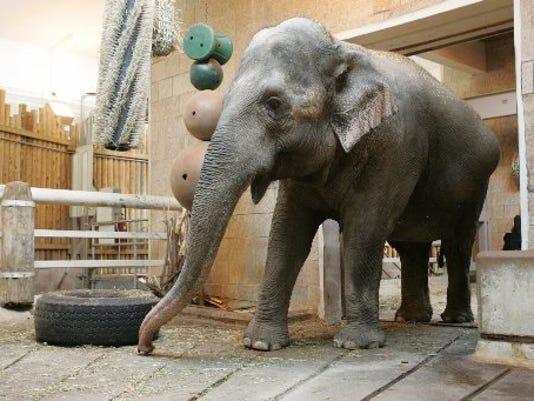 Wanda elephant