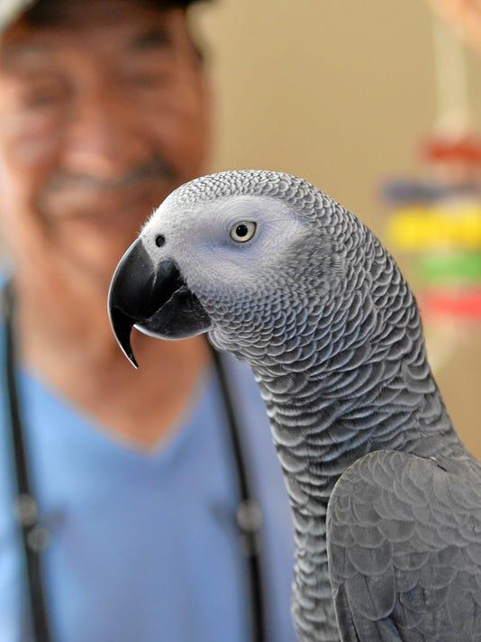 Parrot Reunion (2)
