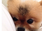 Lea Michele's dog Pearl is as tiny and cute as the singer herself.