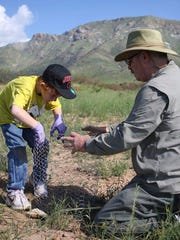 FILE- In this Aug. 20, 2011, file photo, Bob Scott and his grandson, Chase Archer put the final touches on a chicken wire cage to protect a newly planted agave plant from being eaten by deer in Sierra Vista, Ariz. After the construction of the border wall resulted in the death of thousands of agave plants, there was concern among many at the Coronado National Memorial for the lesser long-nosed bat species, which use agave nectar as food. However, wildlife officials say it might be time for a toast now that a once-rare bat important to the pollination of plants used to produce tequila is making a comeback.