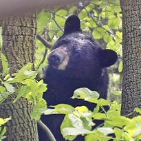 Smith: Top 5 Wisconsin wildlife risks to humans? Maybe not what you think.