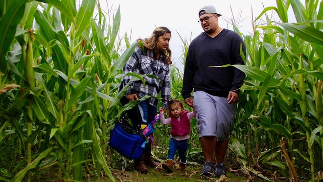 Kami Navarro, 25, left, and Paul Belford, 25, right, walk their daughter Luxe, 18 months, through a full-size corn maze at the Airlie Hills Harvest Festival in Monmouth on Saturday, Oct. 7, 2017.