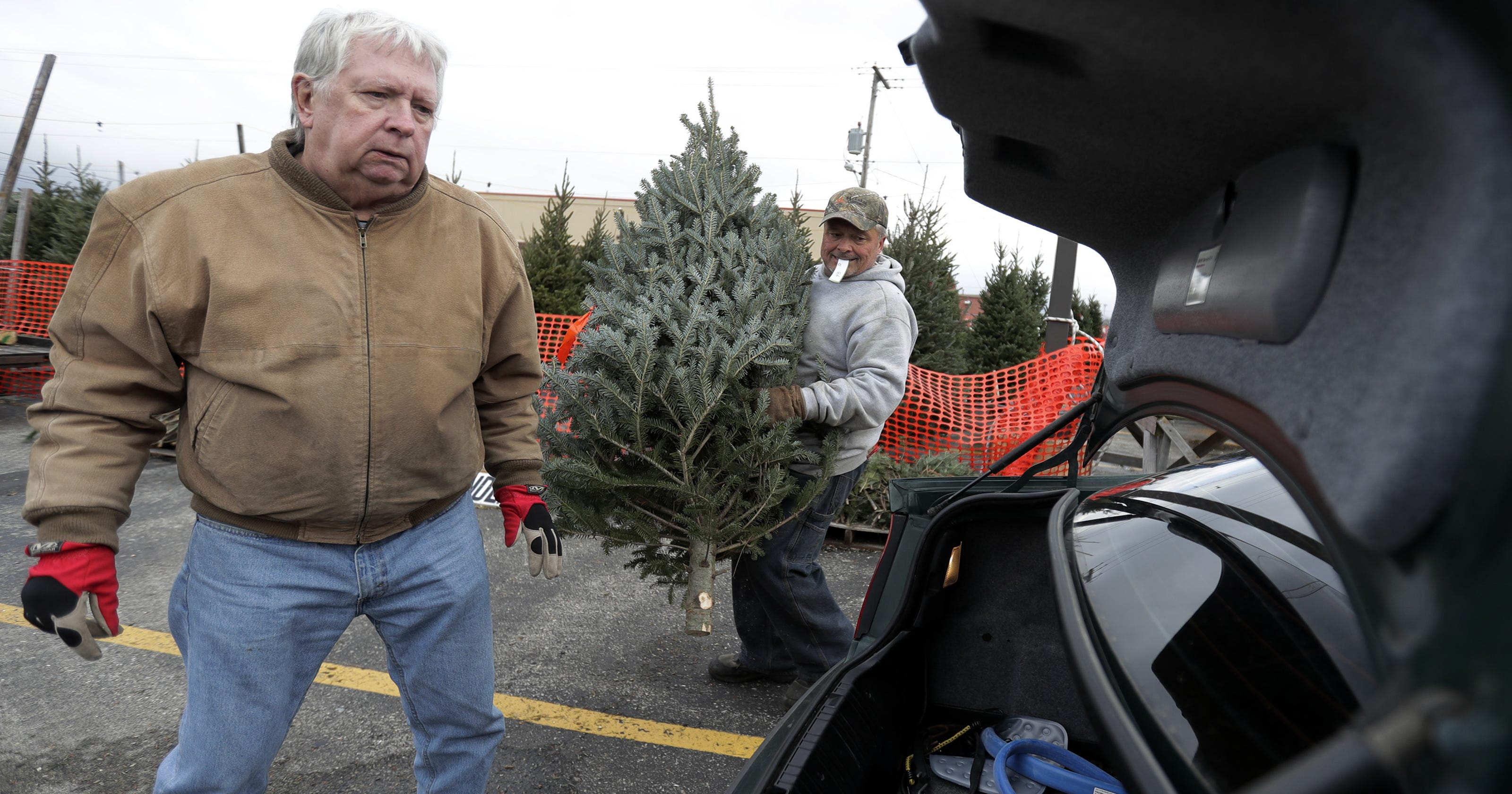 Appleton Again Offers Tree For A Tree Coupons