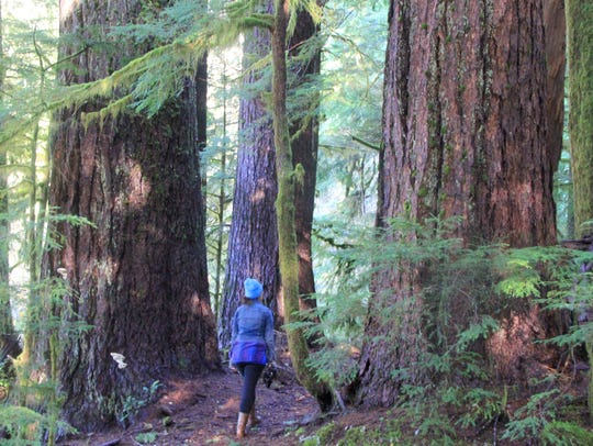 Large trees stick out along the trail at Valley of