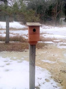 Arrival of bluebirds confirms that spring, indeed, has arrived on the Apps' homestead.