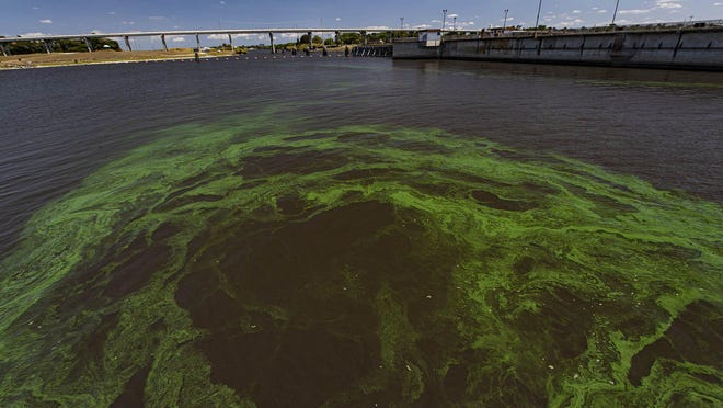 Algae floats into the St. Lucie Canal at Port Mayaca on Lake Okeechobee, Monday, March 30, 2020. Algae can breed in warm temperatures and clear water and every year there is a bloom on the lake, but it's not usually publicized until it affects the estuaries.