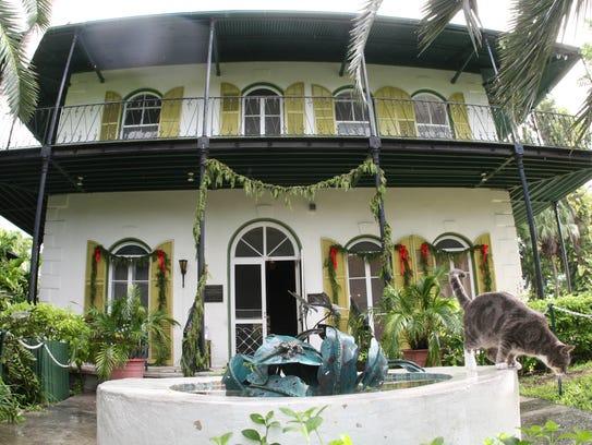 Frances the Cat, named after Hurricane Frances, on