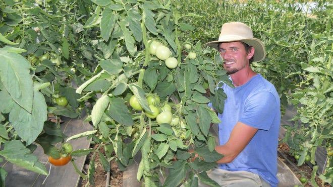 Troy Koehn of Tin Bucket Farms in Inman, Kansas tend to his tomatoes.