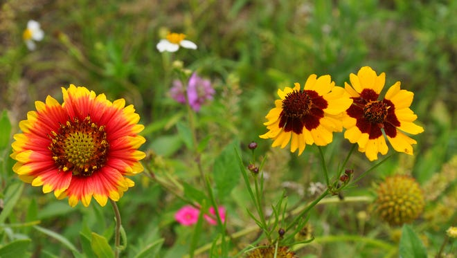 Wildflowers are growing along roadways statewide.