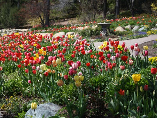 There are nearly 200,000 bulbs at Bibler.