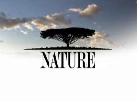 tv wednesday critters� scams revealed on �nature�