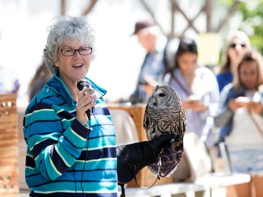 Owl-Festival-01.JPG