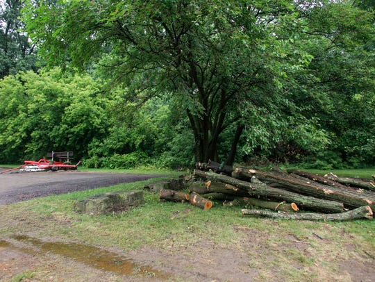 Earlier this month, city crews and a contractor cut
