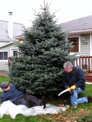 Arctic League board members Tom Bruner, left, and Tom Seem trim branches from the bottom of the tree donated for the 2015 annual broadcast, before cutting it down.