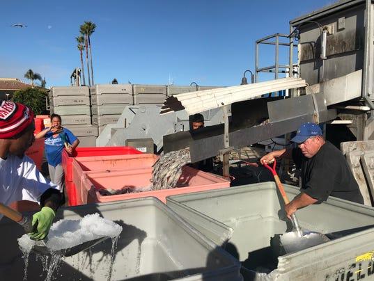 Squid Fishing Nov 7