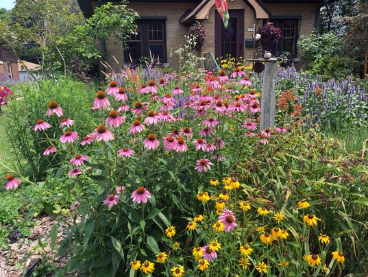 turn your yard into a micro prairie with native plants