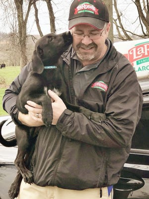 Chili the once-lost Labrador puppy licks LaRosa's Pizzeria driver John Parrett who found the dog during a delivery to a home in Independence.