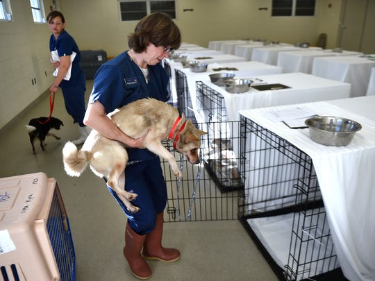 """It's good to know that these dogs will have a loving and great home at some point when they get adopted,"" said Tonya Martinez (front) as she and Robyn Krajewski, both staff members at the Humane Society of Vero Beach and Indian River County, help care for dogs rescued from South Korea on Wednesday, Jan. 18, 2017, at their facility in Vero Beach."