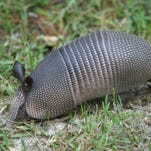 Southern Perspective: Critters inspire tech advances