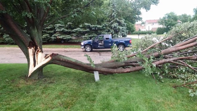 Stearns County Emergency Manager Erin Hausauer said there were multiple trees as large as 24 inches in diameter that were down near Cold Spring and Kimball.