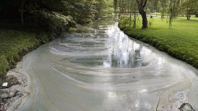 An algal bloom in a creek and ponds at Henry County Memorial park has been identified as cyanobacteria.