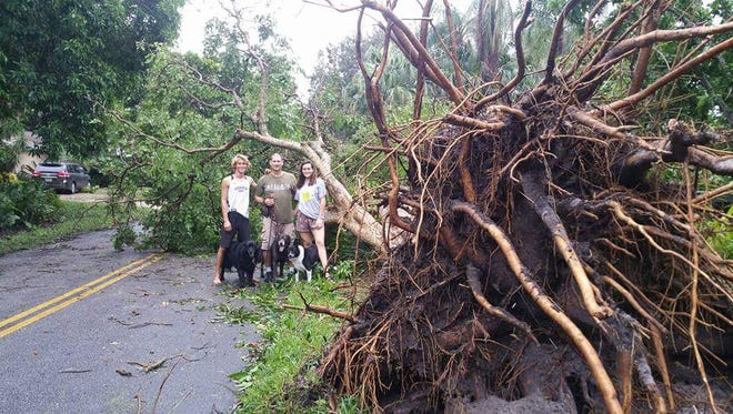 An uprooted tree from Hurricane Matthew