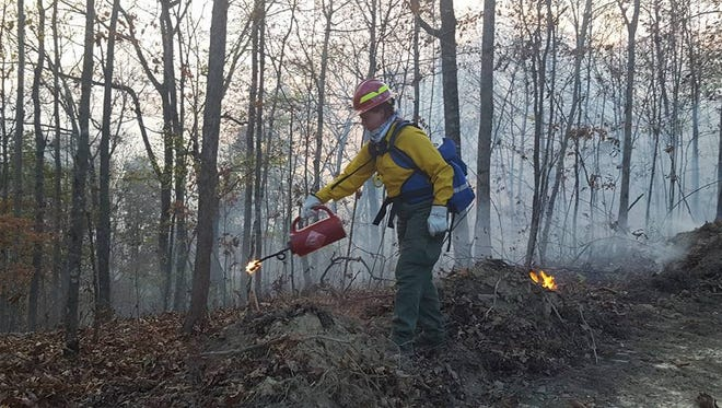 A Kentucky Division of Forestry firefighter sets a backfire in eastern Kentucky as a way to deprive fuel of oncoming flames.