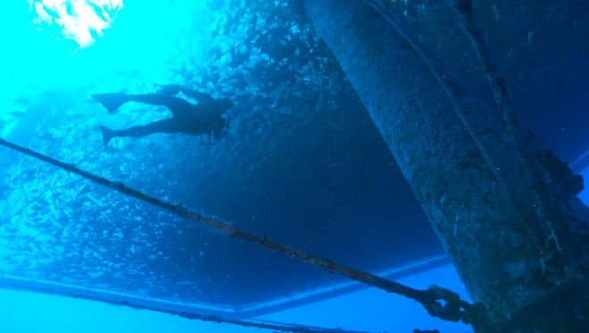 A diver swims amongst a fish farm off the shore of Hawaii's Big Island near Kona. The National Oceanic and Atmospheric Administration is creating a plan for managing commercial fish farms, known as aquaculture, in federal waters around the Pacific - a program similar to one recently implemented by NOAA in the Gulf of Mexico.