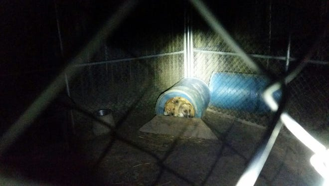A fire caused by a space heater killed four dogs in Cantonment on Monday evening.