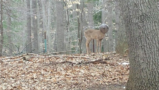 A screen shot of a picture of a male deer with a light fixture on its head from the Monmouth County SPCA's Facebook page,